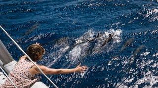 bye bye bahamas sailing to florida s v curiosity