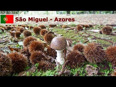 Sao Miguel - Azores - Portugal