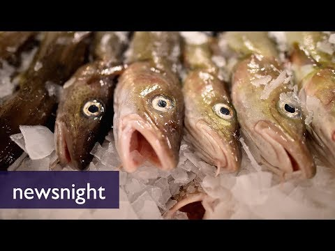 Electrofishing: Saviour of the sea or fracking of the oceans? - BBC Newsnight