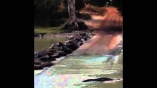 Croc feeding high tide@ Cahill Crossing,NT