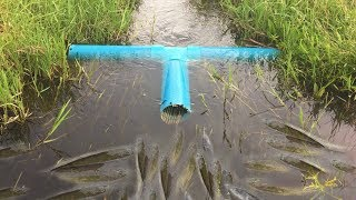 Amazing Boy Make Fish Trap By Small Wood And PVC Pipe In 30Minute -  Easy Fish Trap get alot of Fish