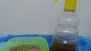 عشبة هندية عجيبة لتطويل الشعر بأسبوع سر جمال شعر الهنديات مع خبيرة التجميل مريم يحيى Youtube