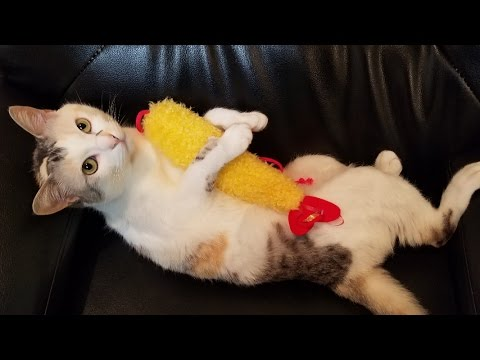 えびの天ぷらに夢中でかぶりつく猫【ネコ吉LIFE part3】Cute Cat Videos part3