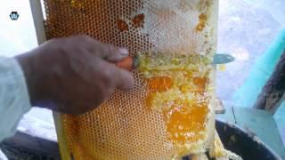 Добыча меда часть 3