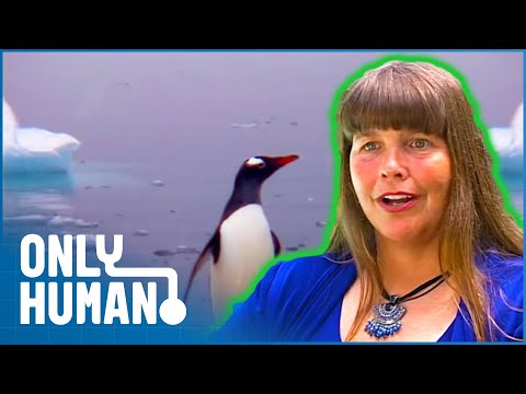 Super Woman Swims In The Antarctic Ocean | Only Human