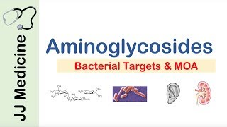 Aminoglycosides | Bacterial Targets, Mechanism of Action, Side Effects
