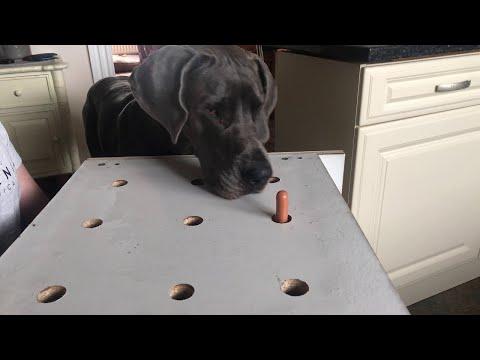 Great Dane Plays Whack a Mole || ViralHog