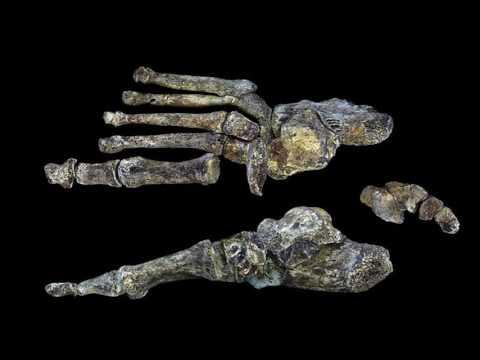 Origins of Bipedalism