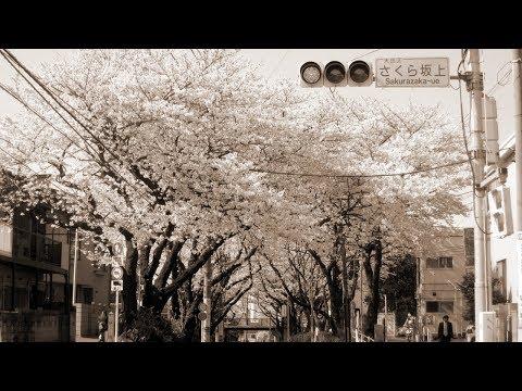 桜坂 - 福山雅治(フル)