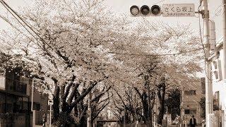 福山雅治 - 桜坂