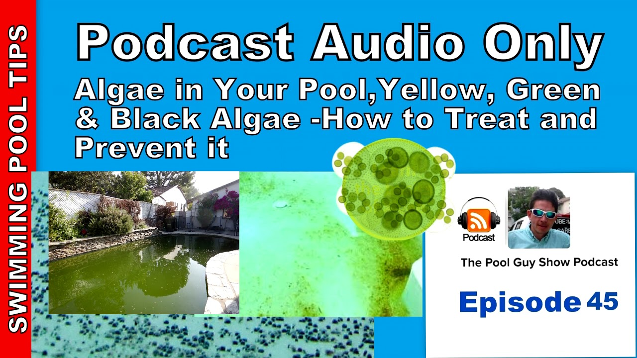 How To Treat Yellow Green And Black Algae And How To