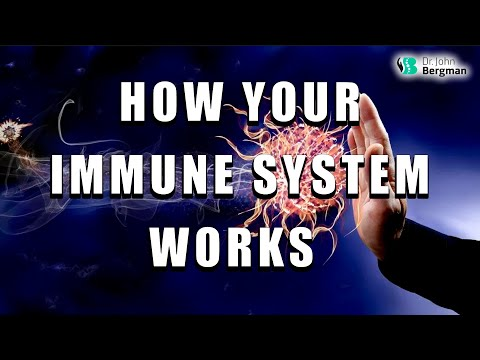 How Your Immune System Works