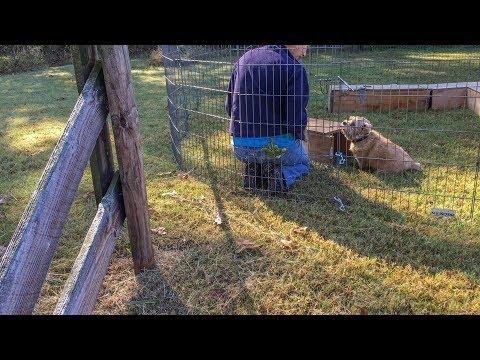 Norfolk Terrier Earth Dog Flunkies