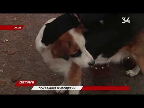 34 телеканал: На Днепропетровщине пенсионерке дали пять лет: убила бездомных собак на глазах у детей