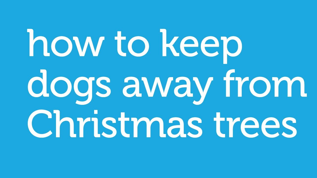 How to Keep Your Dog Away from The Christmas Tree - by ...