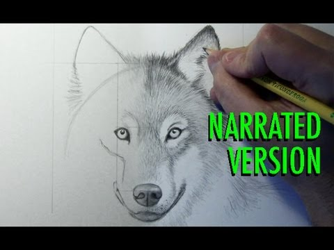 how-to-draw-a-wolf-(narrated)