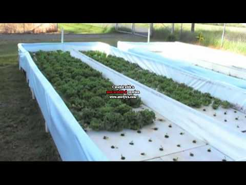 Nelson & Pade hydroponic floating raft system in the N & P aquaponic system, UVI