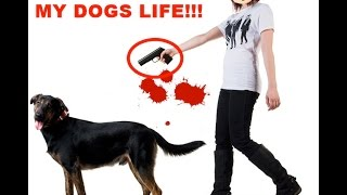 I Bet MY DOGS LIFE You Will LAUGH!!!