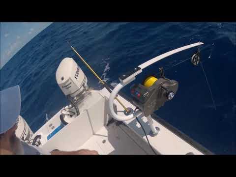 Megalodon Fishing |