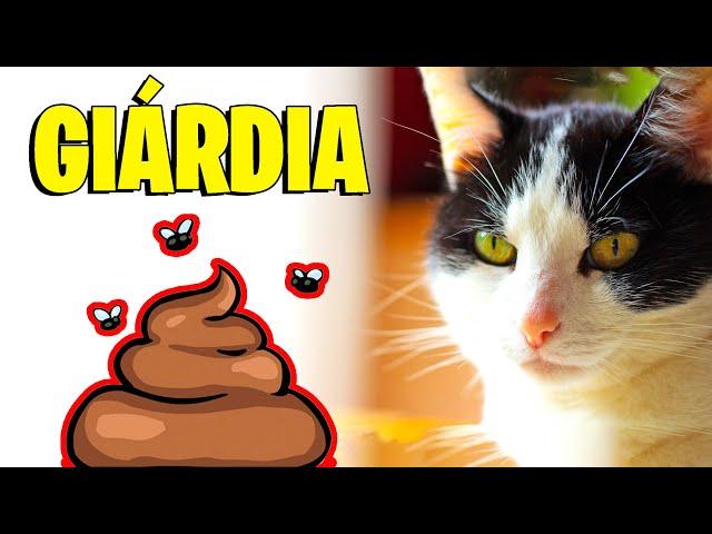 sintomi de giardia gatos
