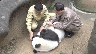 Legendary Giant Panda Basi Dies at 37