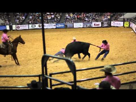 Full Cow Kick - Wild Cow Milking - Davison and Sons - 19th WCRR