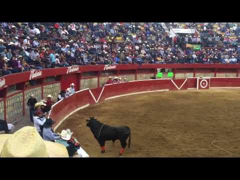 Toro Ratón de la JL de Cuitzeo en la Monumental de Morelia