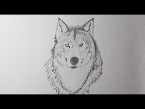 Como Dibujar Un Lobo Paso A Paso How To Draw A Wolf Step By Step