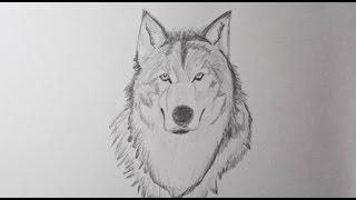 Como dibujar un lobo paso a paso - How to draw a wolf step by step