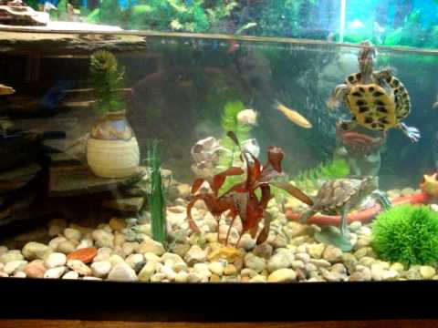 75 Gallon Turtle Aquarium Need Help With Water! - YouTube