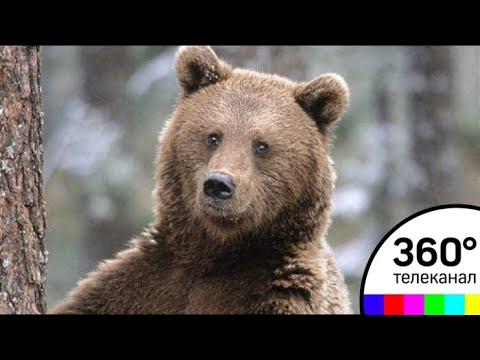 кино фильмы про медведей