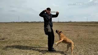 Как научить собаку команде, Отдай?