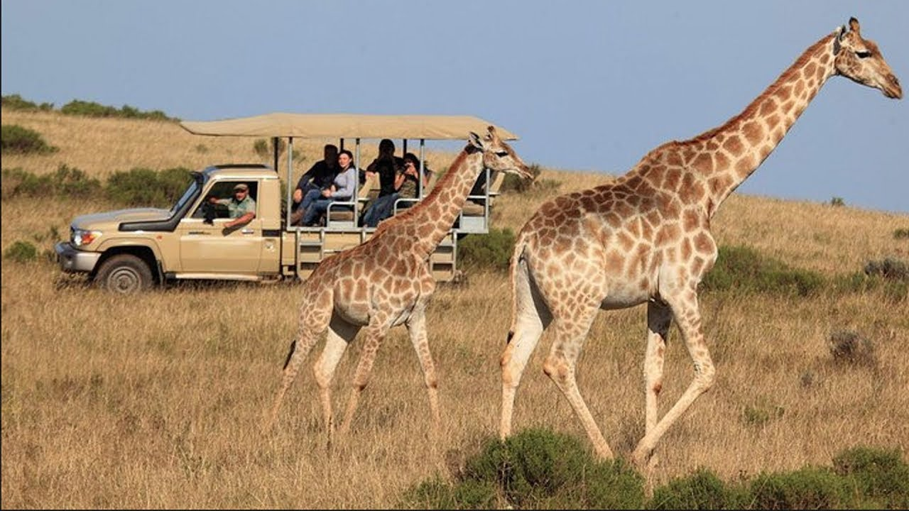 Garden Route 3 Day Tour With Game Safari From Cape Town 2020