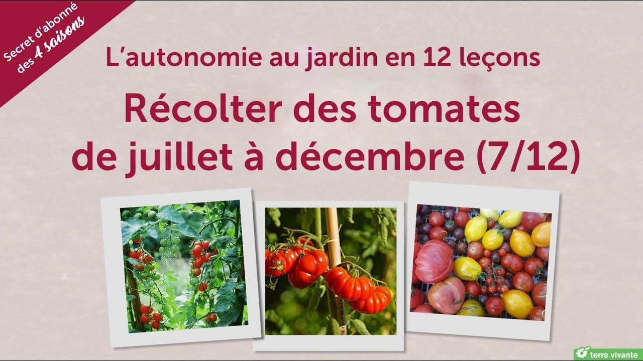 100 Incroyable Conseils Planter Des Tomates En Juillet