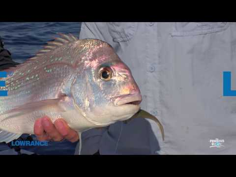 Finding Snapper With Your Sounder