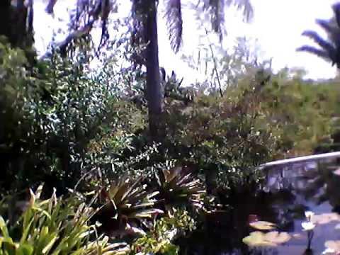 Brazil water garden @ nbg(2)