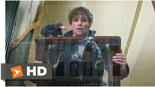 Фантастические твари и где они обитают (2016) - Ньют против Нюхлера сцена (3/9)   Movieclips
