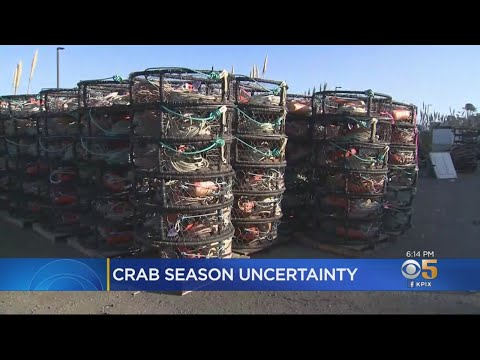 Whales In Prime Crabbing Area Could Delay California's Crabbing Season