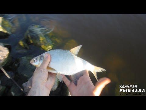 рыба на финском заливе и на что клюет