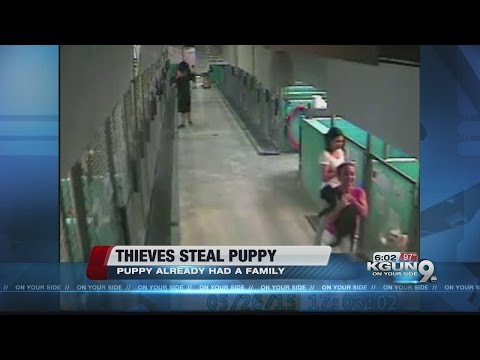 Thieves wanted for stealing puppy from Humane Society