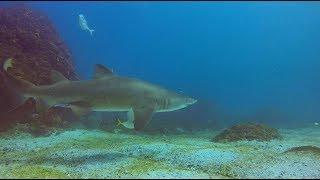Winter scuba diving for Grey Nurse sharks at Julian Rocks, Byron Bay
