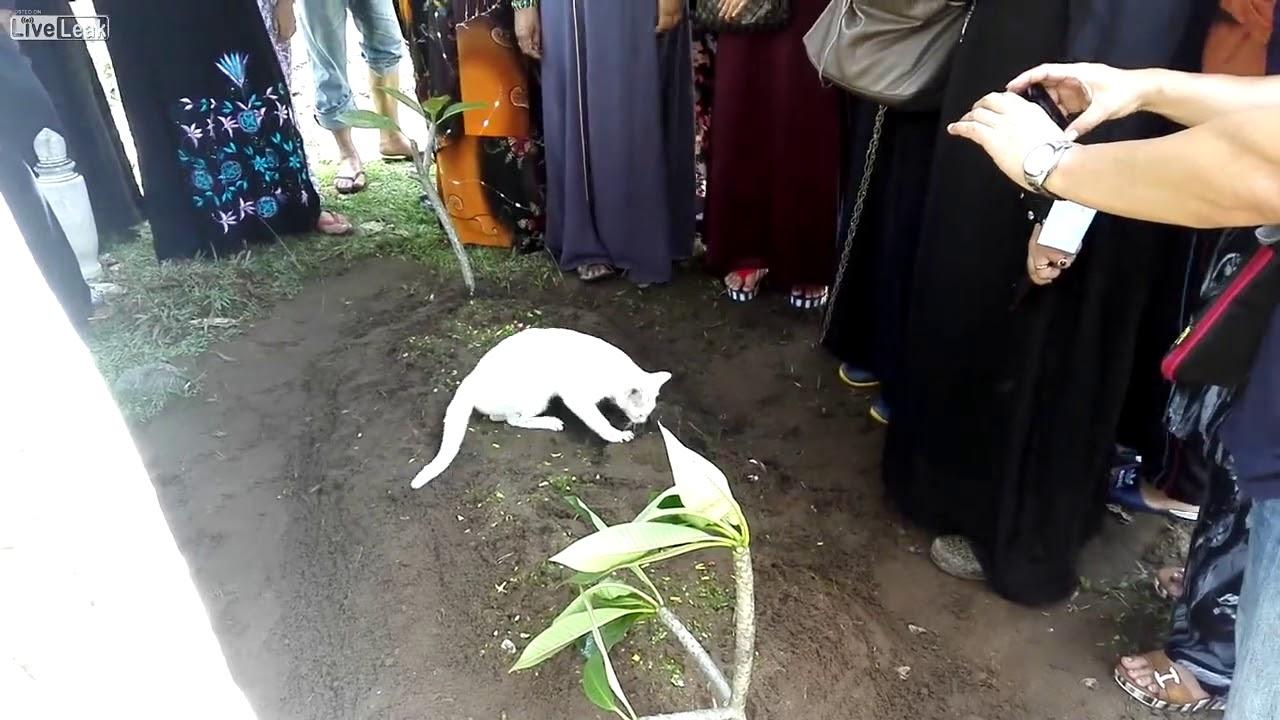 Resultado de imagen para gato se niega a apartarse de la tumba