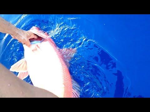 A Wonderful Deep Sea Fishing! !  Big Queen Snapper