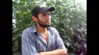 Testimonio 1 Productor Invernadero Belén Gualcho.MPG