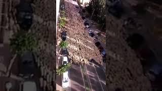 Скачать Мирный митинг баранов