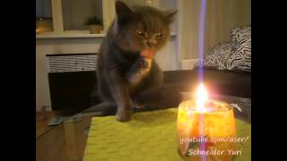 Кот, который хочет съесть огонь