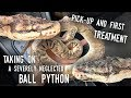 Rescuing SATURN, a BADLY ABUSED Ball Python   Pick-up and Initial Treatment