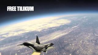 Tilikum the Whale Goes to Space.  Free Tilikum
