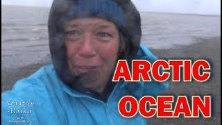 muskox-and-a-dip-in-the-arctic-ocean-rving-the-dalton-hwy-alaska