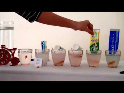 Thí nghiệm về kem đánh răng AP24   USA • Toothpaste toothpaste experiment on AP24 USA